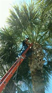 FULLINGTON LAWN & TREE SERVICES LLC photo #2