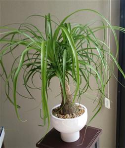 MIAMI PLANTSCAPES, LLC photo #1